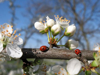 картинки весна: